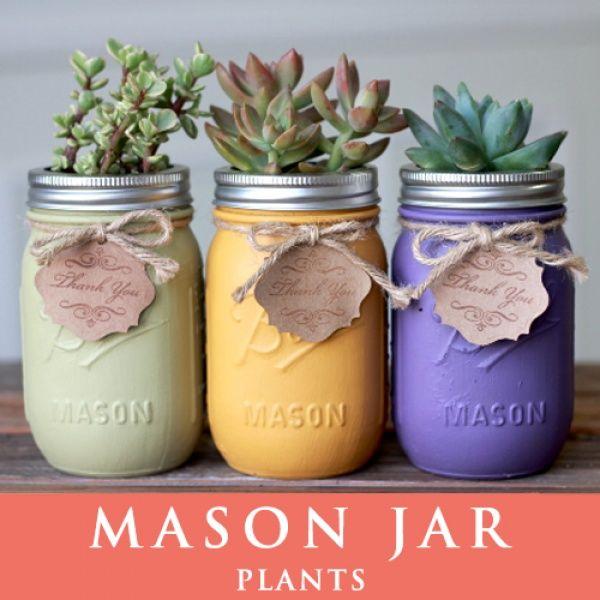 画像1: メイソンジャー 多肉植物 サボテン Ball Mason jar メイソンジャー レギュラーマウス 16oz メイソンジャープランツ 植物 ギフト 3個セット (1)