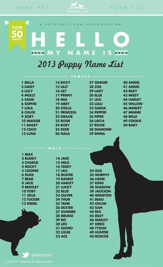 Pin De Aathi Em Nicknames Nomes Para Cachorros Nomes De