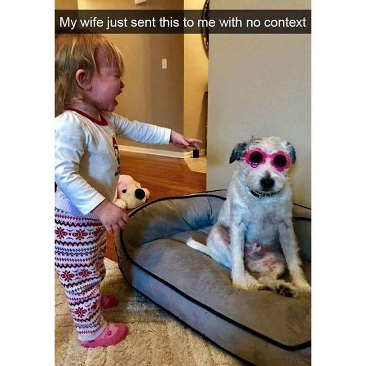 Hahaha Brilliant Crazy Funny Memes Funny Animal Memes Dog Memes