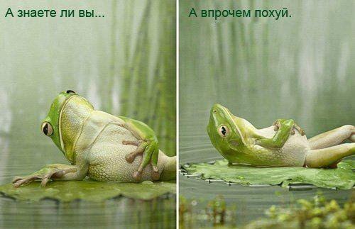 E_bFROMl2Xg.jpg (500×323)