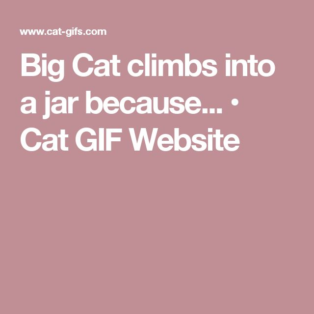 Big Cat climbs into a jar because... • Cat GIF Website