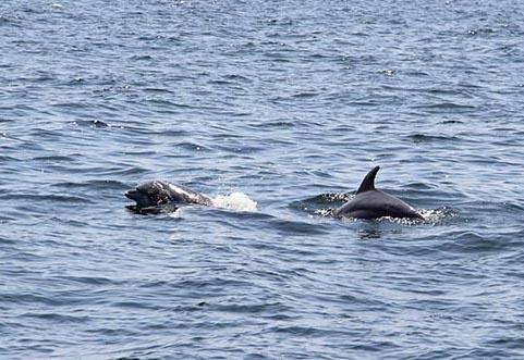 Destin,FL  watching the dolphins