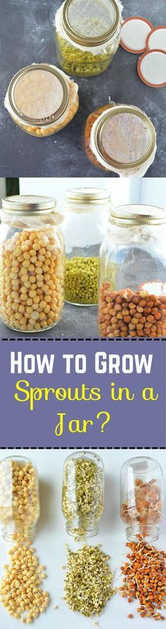Sprouting is a great way of enjoying your favorite beans and grains. They are a great addition to salads, sandwiches, chaats and cutlets. A step by step tutorial on how to make perfect #sprouts in a jar.