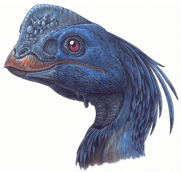 Chirostenotes pergracilis - a feathered dinosaur - an oviraptor