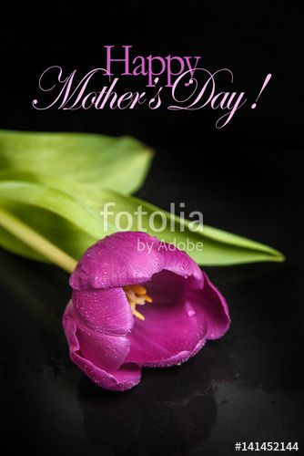 """Download the royalty-free photo """"Mother's day vertical banner or greeting card with purple pink tulip and text """" created by stillforstyle at the lowest price on Fotolia.com. Browse our cheap image bank online to find the perfect stock photo for your marketing projects!"""