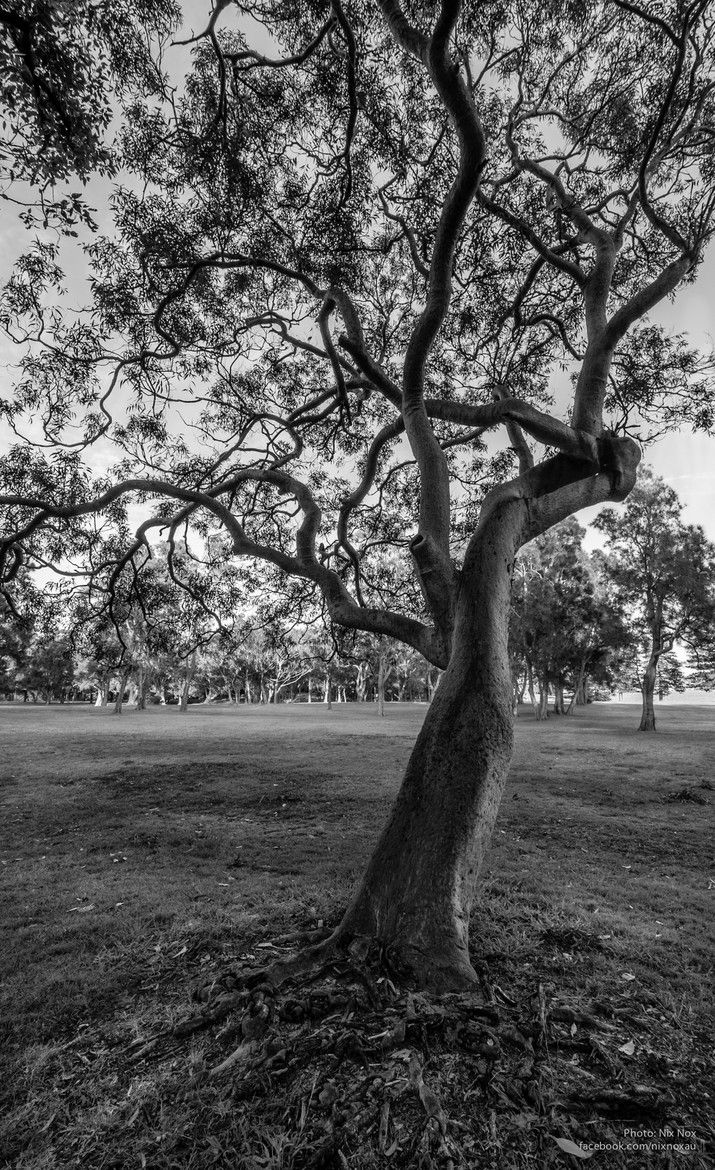 """""""Just a Tree"""" in black and white which was taken at Kurnell in Sydney, NSW."""