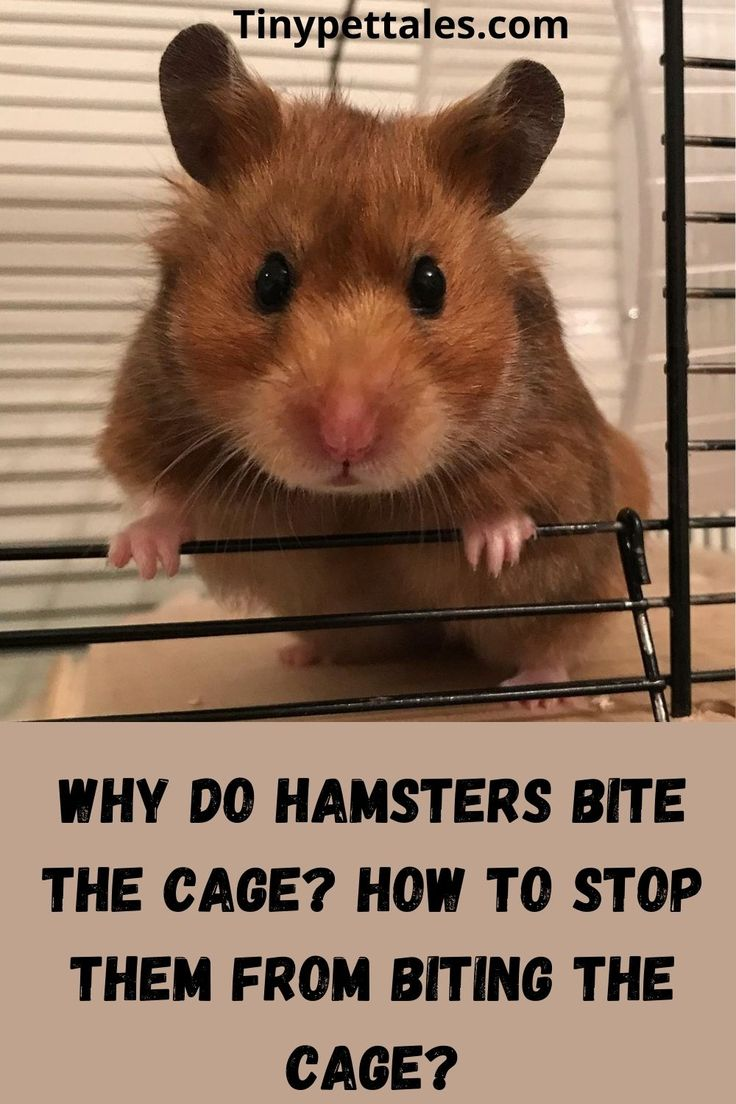 7d4ed484d9c0fde633a0f0595fcadd52 - How To Get My Hamster To Stop Biting His Cage