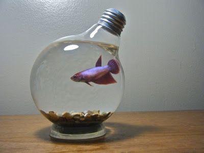 Betta fish inside plant vase google search ideas for Betta fish vase
