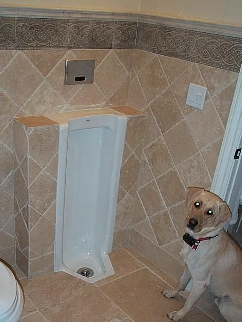 The Urinals Of Dave S House Home Search Map Gallery Top 10