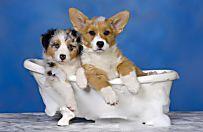 Come lavare il cane: consigli per il bagno di Fido