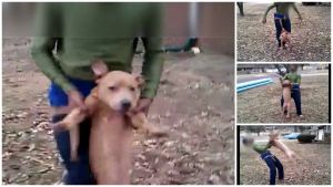 2 Juveniles Arrested After Dog Abuse Video Goes Viral on Facebook | The Dogington Post