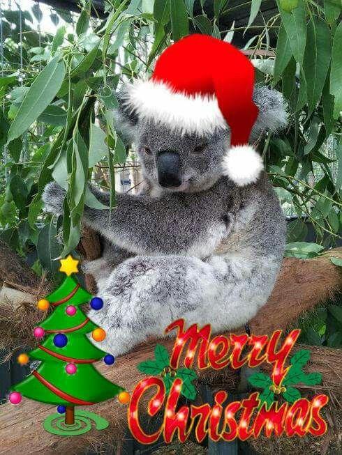 198 best Aussie Christmas images on Pinterest | Koalas, Merry ...