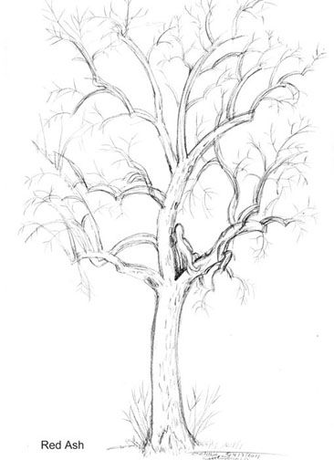 Dryads and Trees -Drawing tutorials