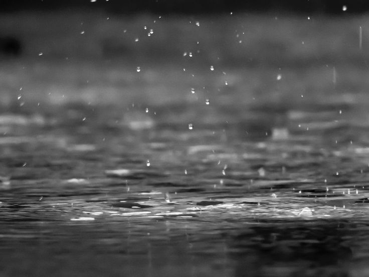 Rain, Drops, Black And White, Close Up, Water, Nature