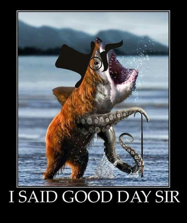 7d50610ec6365b820bb835577b1b6a49 its you sharks 237 best memes images on pinterest funny pics, funny stuff and