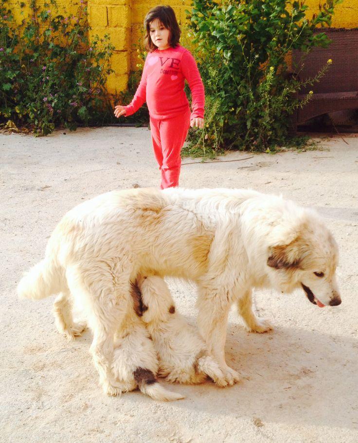 Amamantando aún Oda y sus cachorros de 40 días