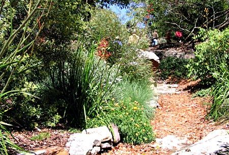 23 best images about australian native garden on pinterest for Australian native garden layout