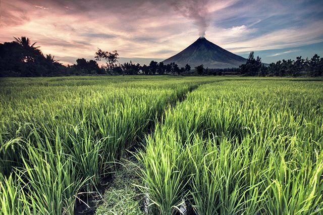 El volcán Mayón es conocido como el 'cono perfecto' solo hay que fijarse en su forma es realmente bellísimo. Estos días entró en erupción y lo bello se transformó en peligroso (en algunas personas pasa lo mismo). La naturaleza en carne viva. ................. Fot.: FVega #mayon #volcan #volcano #filipinas #philippines #asia #arroz #rice #naturaleza #nature #musica #music .................  Tiësto - Boom