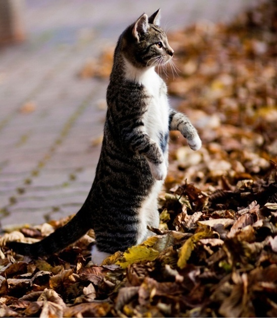 Adorable beautiful cat standing on her back feet in the garden .... click on picture to see more