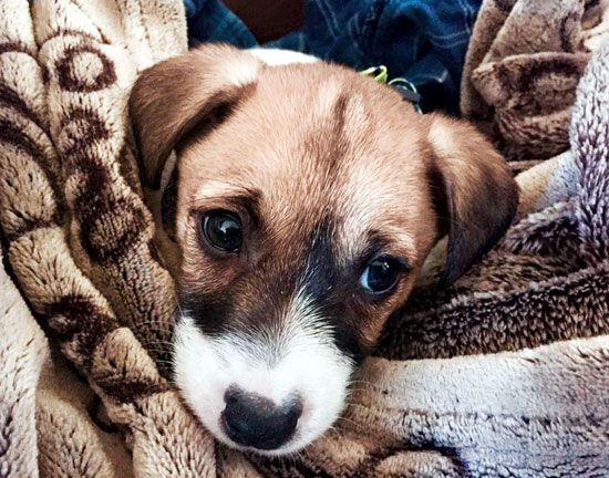 Risultati immagini per cane coperta