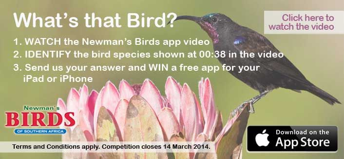 Newman's Birds App | Online Competition  http://www.randomstruik.co.za/competitions/newman039s-birds-app-online-competition