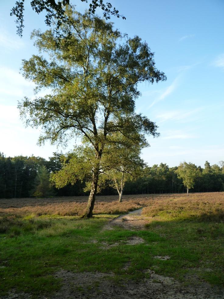 In de bossen van Oosterbeek.