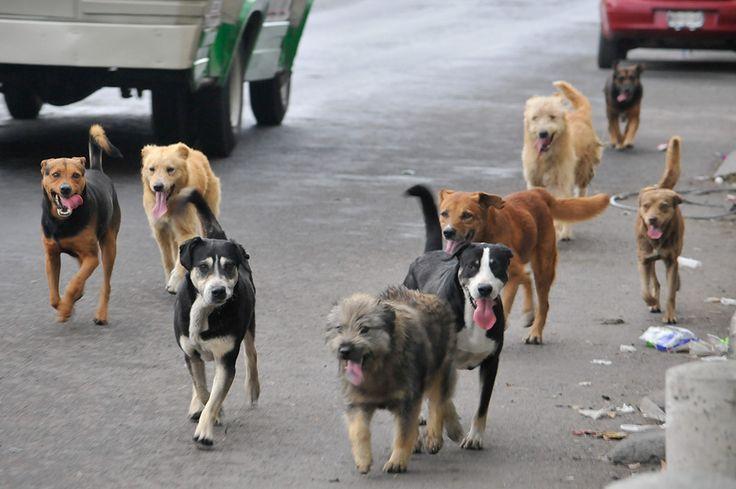 """""""Si nadie reclama a los animales después de 3 días hay que desaparecerlos"""", dijo Castillo."""