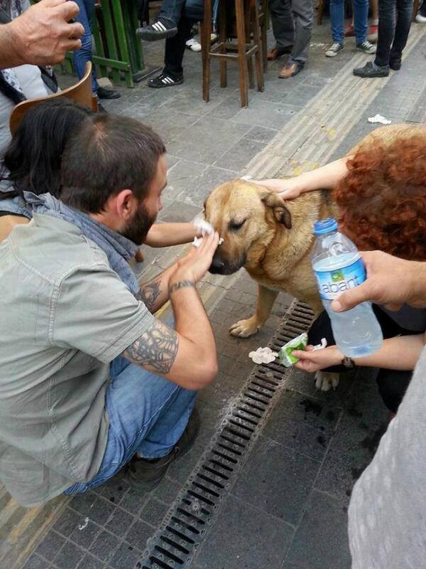 Taksim Gezi Parkı resistance. Turkish people help dog who amenable to tear gas Please help our resistance against it would not be up your turkey vulnerable brothers and sisters need it, please share it and the facts that our people are given very large losses wishing to be silent in the face