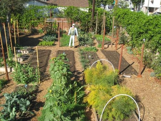 """Asked for tips for first-time gardeners, Steven Wynbrandt's suggestions are surprisingly simple: """"Grow what you love to eat. Seek people in your neighborhood and microclimate, and find out what they have grown with success. Consult the UC Extension planting schedule and try to use the best compost you can, whether you make it yourself or not."""""""