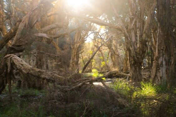 Yellagonga Regional Park, Perth