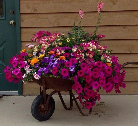 Willst du auch was anderes in deinem Garten sehen, aber hast die Standardkübel aus den Baumärkten satt? Dann haben wir hier 17 tolle und kreative Ideen um Pflanzenkübeln selber zu machen! Du willst einen gemütlichen und farbenprächtigen Garten, aber du weißt nicht, wie du das anfangen sollst? Siehe dir die Bilder hier unten an und – Pin Zeit