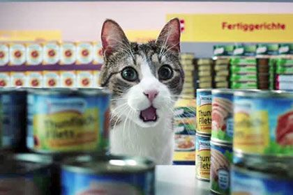 Немецкий супермаркет Netto снял рекламу, в которой в роли покупателей и работников магазина снялись кошки. Животные катают тележки для покупок, выбирают продукты и стоят в очереди на кассе. В конце ролика появляется довольная морда кота, затем видео завершается надписью «Такие выгодные цены радуют всех».