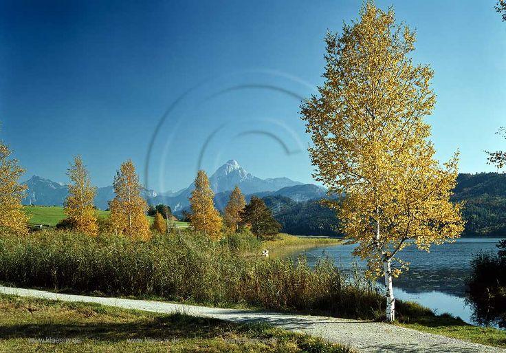 Weissensee σε Allgaeu, θέα στη λίμνη προς Säuling το φθινόπωρο τοπίο, αλλαγή Birch?  Weissensee σε Allgaeu, θέα στη λίμνη Säuling βουνό το φθινόπωρο χρωματιστά χώρα Pape με σημύδες