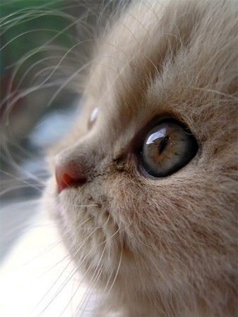 Cute kitty...eyes full of wonder...oh my goodness...