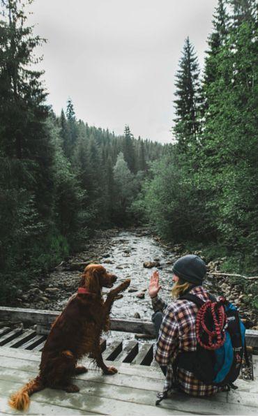 Die Botschafter von Camping With Dogs. Folgen Sie diesen fantastischen Hündinnen und