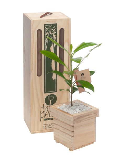 Living tree gifts - eco conscious and earth friendly.  Show you care and give a lasting gift.