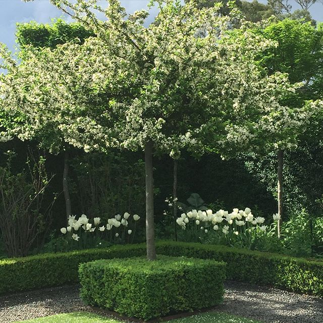 """One of my favourite crabapples malus spectablis , in the white garden at Stonefields. #paulbangay #Stonefields #garden"" Photo taken by @paulbangay on Instagram, pinned via the InstaPin iOS App! http://www.instapinapp.com (10/12/2015)"