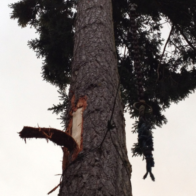 Lightning strike on my Dad & Mom's tree. Friday the 13th!! (July)