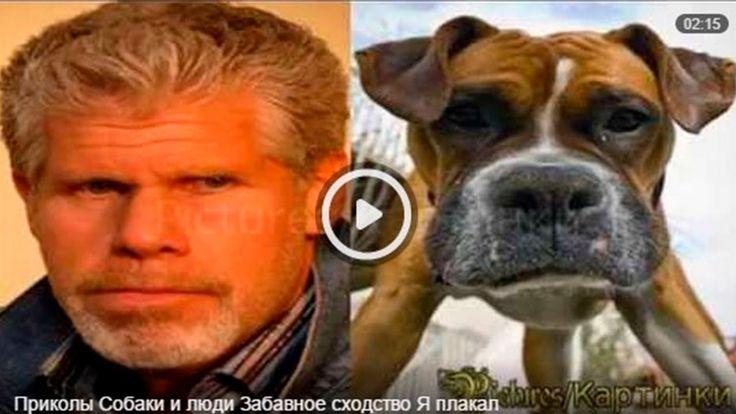 Видео приколы сходство поразительное между людьми и собаками, после просмотра этого смешного видео ещё минут пятнадцать не мог сдержать смех.