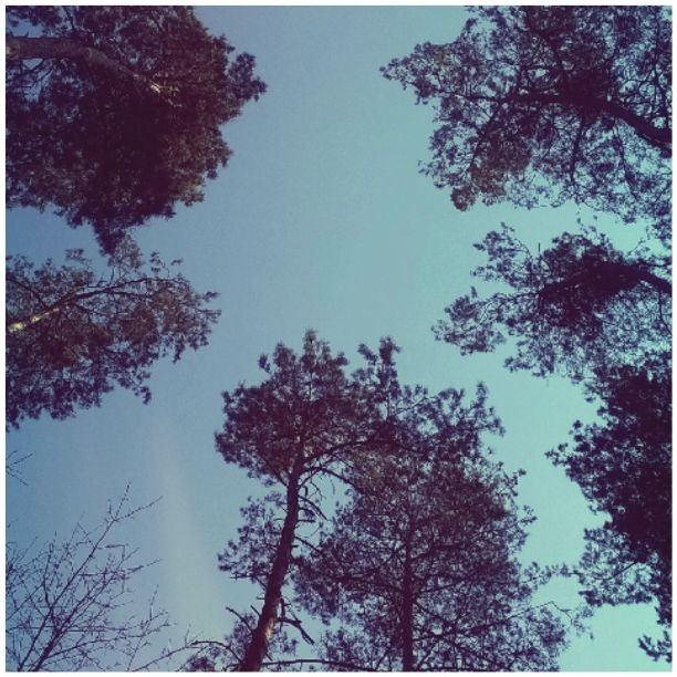 sky 4 and trees