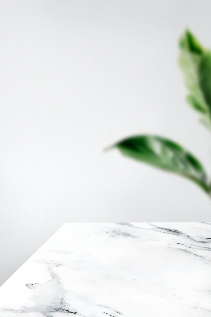 Download premium image of Plain gray wall with leaf and white marble table