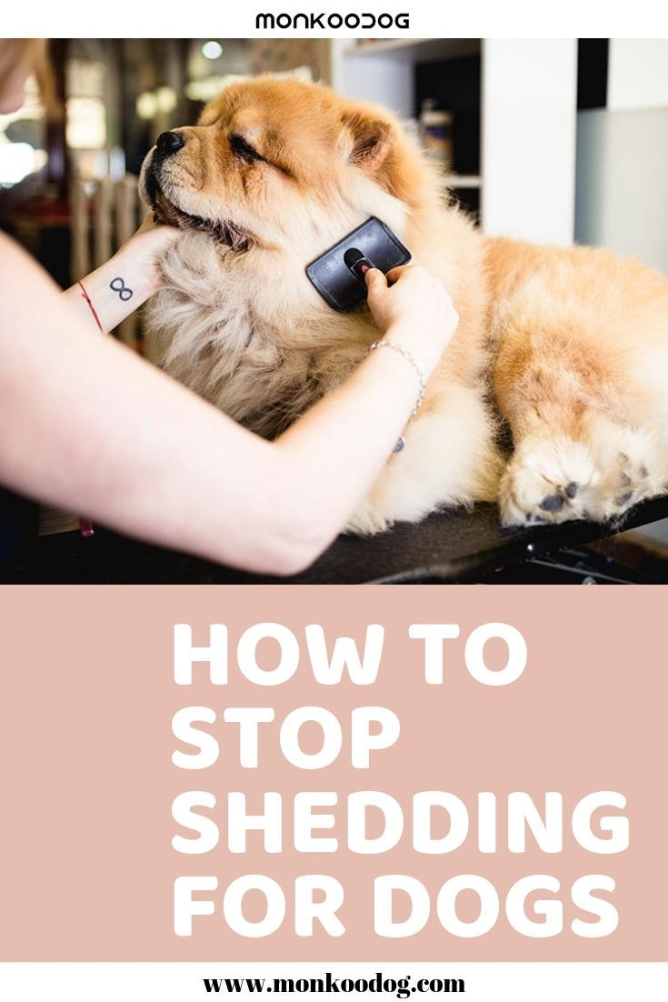 We Ll Show You How To Reduce Fur Shedding For Your Dog And How To