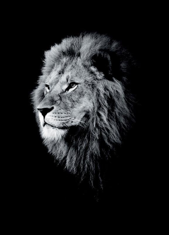 Dark Lion Head Par Wouter Rikken Animaux Noir Blanc Animauxsauvages Lions Noir Blanc Ju Lion Noir Et Blanc Photographie De Lion Fond D Ecran Lion