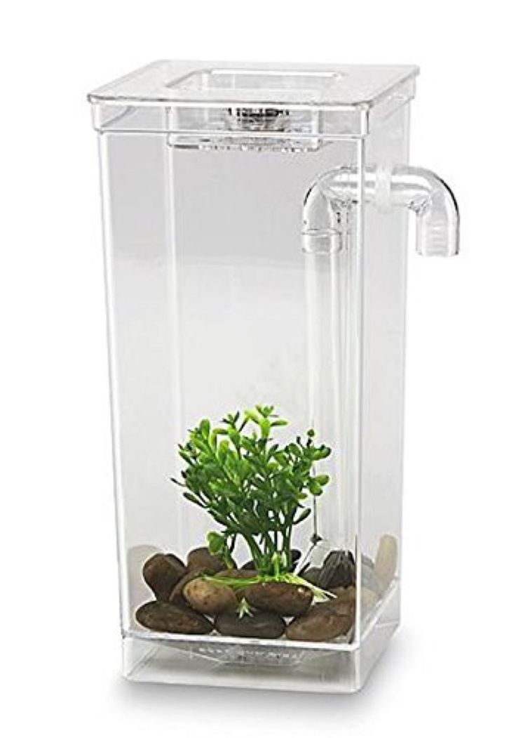 25 best ideas about small fish tanks on pinterest for Best small fish tank