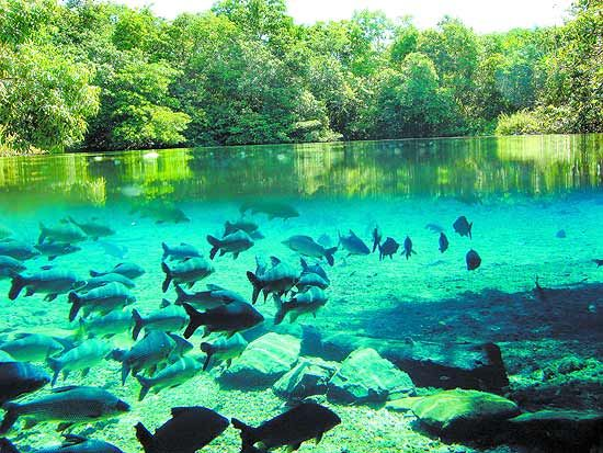 Bonito, Matro Grosso Do Sul, Brazil