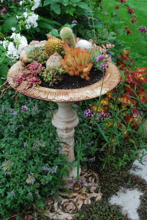 a cactus garden in an iron birdbath