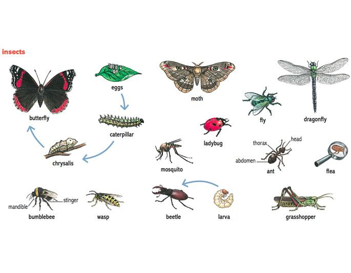 Insect Features English For Kids Pinterest English