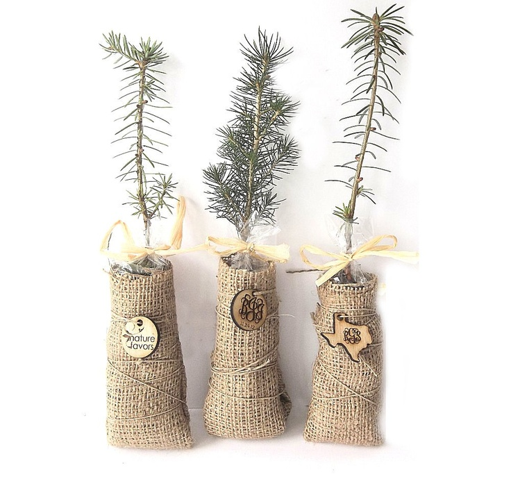 41 Unique Wedding Gift Ideas For Bride And Groom In 2020: Personalized Evergreen Tree Seedlings