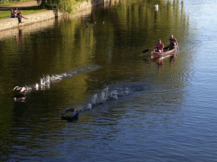 Dank der Nähe zur Alster werden einem viele Freizeitaktivitäten angeboten. Sei es Tretbootfahren oder paddeln hier findet sich für jedem etwas.