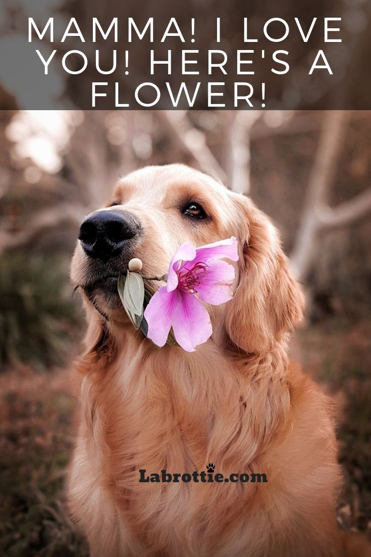Puppy Training Goldenmemes Tips Names Facts Photography